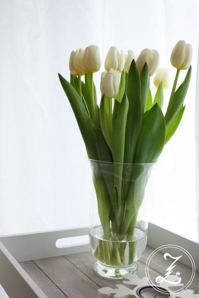 frische weiße Tulpen by Zuckergewitter