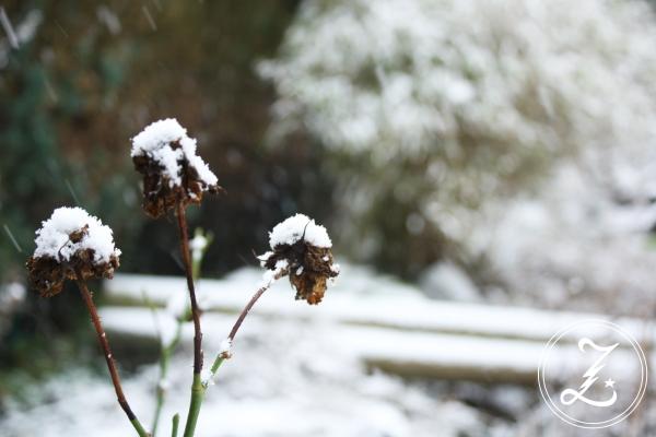 Schnee by Zuckegewitter