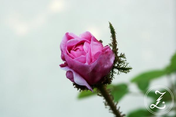 Gartenliebe | Zuckergewitter.de