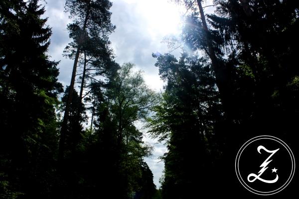 Sonne in den Bäumen | Zuckergewitter.de